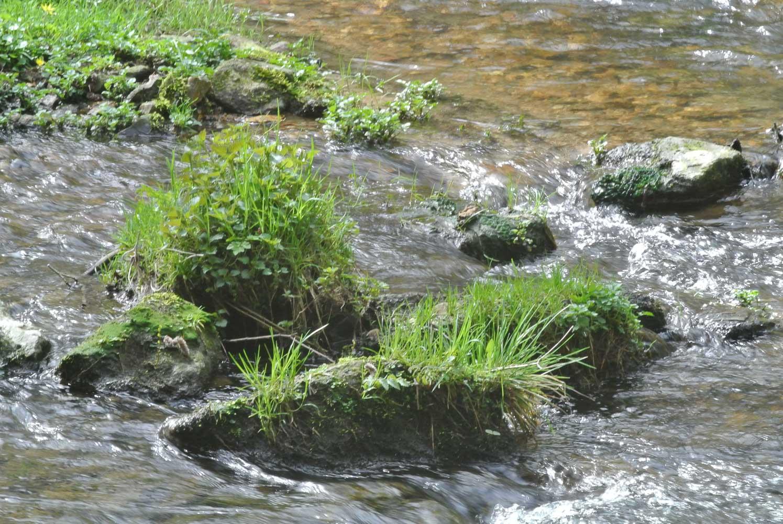 Moose und Gräser am Riedbach